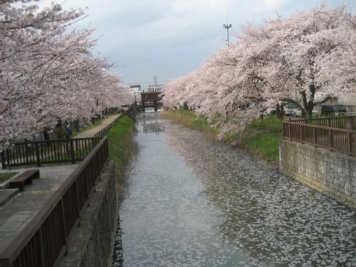 1280pxkasaiyosui_on_soka_saitama_japan1